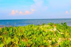 瓷海滩  库存照片