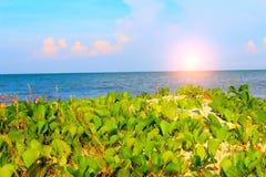 瓷海滩  库存图片