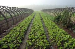 瓷种田 免版税库存照片