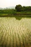 瓷耕种米 免版税库存照片