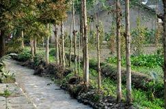 瓷被排行的pengzhou流结构树 免版税库存图片