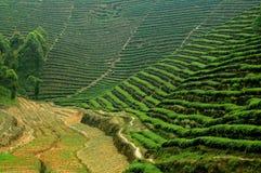 瓷emeishan种植园茶远景 免版税库存照片