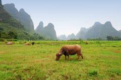 瓷guangxi石灰岩地区常见的地形省风景 免版税库存图片