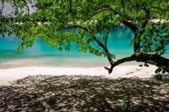 瓷jiuzhaigou湖熊猫四川 库存图片