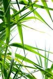 甘蔗叶子背景 库存照片