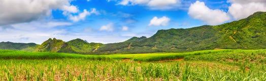 甘蔗和山的看法 美好的横向 毛里求斯 全景 图库摄影