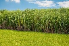甘蔗和米 图库摄影