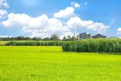 甘蔗和米 库存照片