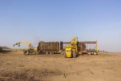 甘蔗拖拉机装货 库存图片