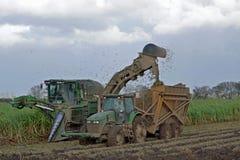 甘蔗收获 免版税库存图片