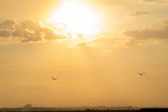 甘蔗日落种植园 免版税图库摄影