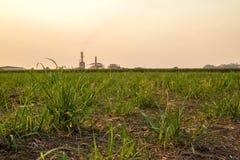 甘蔗日落种植园 免版税库存照片