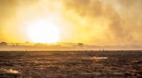 甘蔗火种植园 免版税库存图片