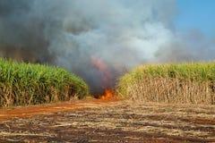 甘蔗种植园和火 免版税库存图片
