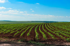 甘蔗种植园 免版税库存照片