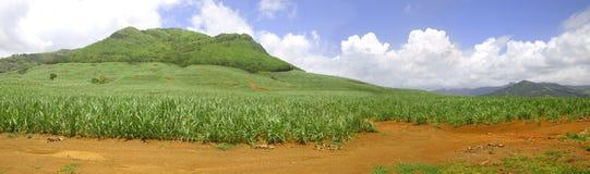 全景甘蔗领域在毛里求斯 免版税库存照片