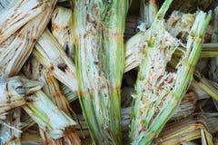 甘蔗蔗渣-有机废料 图库摄影