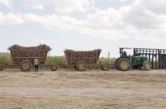 甘蔗运输 免版税库存照片