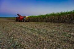 甘蔗领域机械收获与拖拉机运载的收获 免版税库存照片