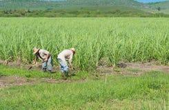 甘蔗领域的古巴领域农夫在圣克拉拉古巴- Serie古巴报告文学的收获期间 免版税库存图片