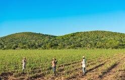 甘蔗领域的古巴领域农夫在收获期间在西恩富戈斯古巴 免版税库存图片