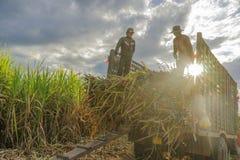 甘蔗领域,西宁省,越南 免版税库存照片