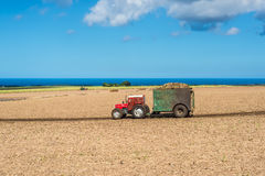 甘蔗领域-毛里求斯的农业风景 免版税库存图片