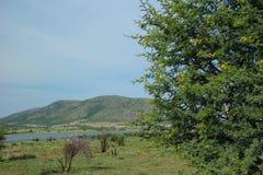 甜刺,金合欢南非洲的干燥台地高原 库存照片