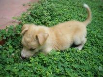 甜和逗人喜爱的小狗 免版税库存照片