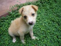 甜和逗人喜爱的小狗 库存图片