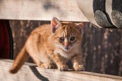 甜小猫 免版税库存照片