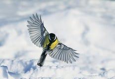 甜心一只美丽的鸟广泛飞行传播它的在s的翼 免版税库存照片