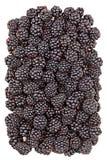 甜成熟黑莓 免版税库存照片