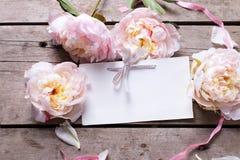 甜桃红色牡丹花和空标识符在减速火箭的木backg 免版税库存照片