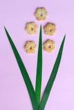 甜植物布置 免版税库存图片