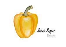甜椒黄色 在白色背景的手拉的水彩绘画 也corel凹道例证向量 免版税图库摄影