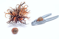 甜榛子和胡桃钳 库存图片