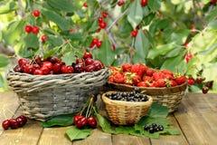甜樱桃、草莓和黑醋栗在柳条筐在木书桌上在庭院里 免版税图库摄影