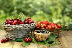 甜樱桃、草莓和黑醋栗在柳条筐在木书桌上在绿色背景 免版税库存图片