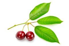 甜樱桃和新鲜的叶子果子  免版税库存图片