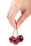 甜樱桃果子在女性手上 库存照片