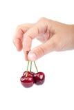 甜樱桃果子在女性手上 图库摄影