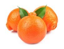 甜橙果子 库存照片