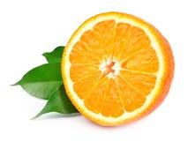 甜橙结果实(minneola) 免版税库存照片