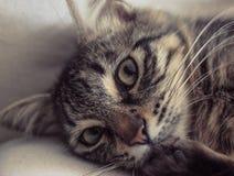 甜猫 库存图片