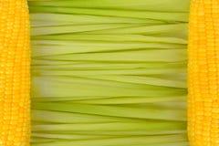 甜玉米玉米棒叶子背景的关闭在左右边水平地被放置和两根黄色玉米棒子 库存照片