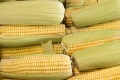 甜玉米的耳朵 库存照片