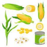 甜玉米集合,新鲜的棒子,玉米花,装玉米在白色背景的传染媒介例证于罐中 向量例证