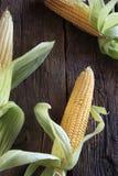 甜玉米 库存照片