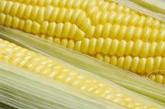 甜玉米 图库摄影